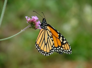 2005_0831Monarch_Aug050001