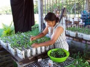 El Salvador seedlings